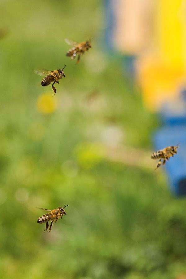 Wat zegt de wetenschap over het bestrijden van wespen